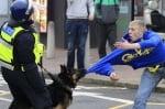 Куче хваща престъпник