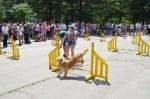 Игра за кучета - Агилити