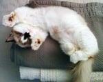 Алберт котето се търкаля по гръб