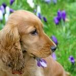Алергични реакции при кучето - Първа помощ
