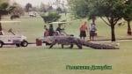 Алигатор във Флорида