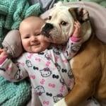 Английски булдог с бебе