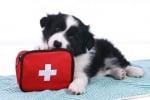 Аптечка за кучета - необходими неща за първа помощ