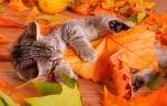 Есен е ... ♥