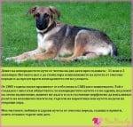 31 юли и 2 декември - Ден на непородистото куче