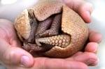 Снимки на бебета животни, които ще разтопят дори и най - студеното сърце