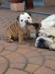 Бебе и мама кучета