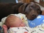 Бебе с куче лабрадор