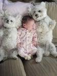 Бебенце с булонки