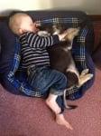 Бебета куче и дете