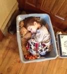 Бебета лабрадори с дете