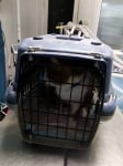 Бездомна котка за лечение