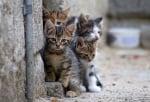 Бездомни котенца от Пловдив