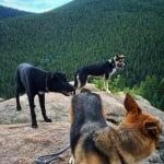 Бездомни кучета в Сочи, осиновяване