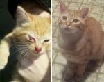 Бездомно оранжево котенце