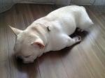 Смешни снимки на безгрижно спящи кучета