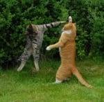 Битка между котараци