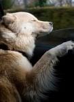 Блажено куче