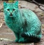 Боядисана синьо-зелена котка във Варна