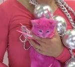 Боядисаното коте