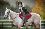 Бордърколи язди кон