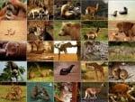 Общи сведения за бозайниците