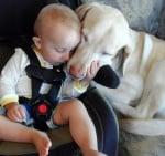 Бял лабрадор с бебе в колата
