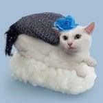 Бяла котка с шал и цвете като Неко-Суши