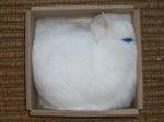 Бяла котка в тесен кашон