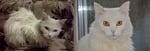 Бяло коте преди и след приюта