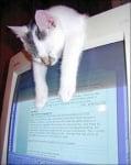 Бяло коте спи върху монитор