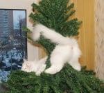 Бяло коте в елха