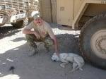 Бяло куче на война