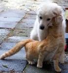 Бяло кученце с котка