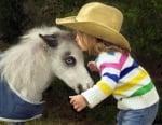 Бяло пони албинос