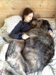 Бременно куче