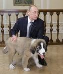 Бъфи и Путин