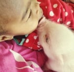Целувка между дете и прасенце