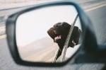 Черен лабрадор в кола