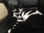 Черна котка на райета
