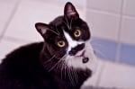 Черна котка с мустаци