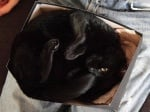 Черна котка в кутия