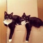 Черно-бели котки