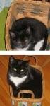 Черно-бяло коте в кошница