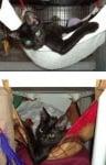 Черно коте в хамак