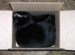 Черно коте в кашон