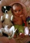 Чихуахуа с бебе