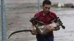 Човек спасява кенгуру