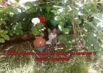 Цветя от градината на Томи