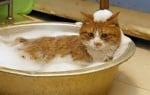 Да изкъпем котката